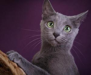 Van Cleave Cat