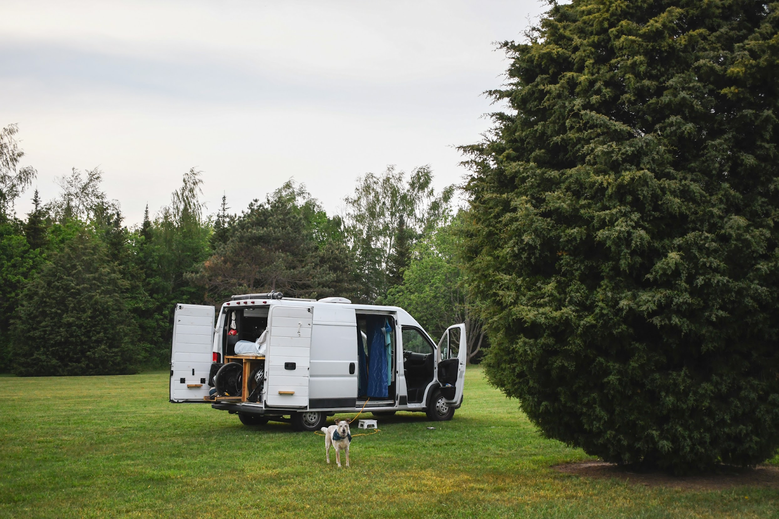 White van parked in green field with dog and tree in front.
